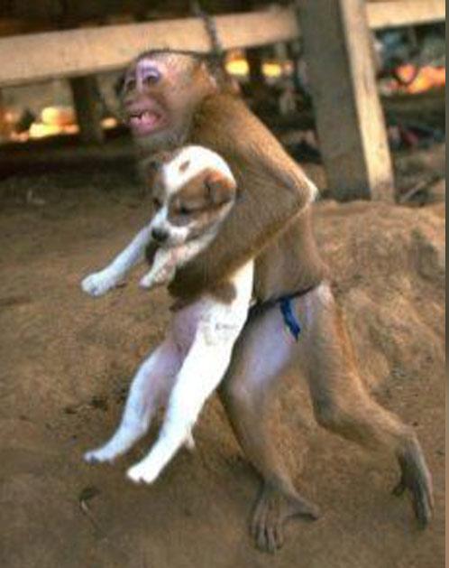somalie-attentat-singe-sauve-chien-1-secretnews Attentat en Somalie : un singe qui sauve un petit chien devient un héros sur les réseaux sociaux