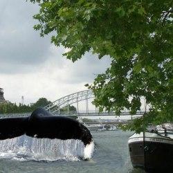 Paris : Des baleines dans la Seine après un siècle d'absence