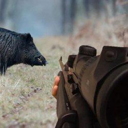 Nouvel accident de chasse: croyant tirer sur un promeneur, il tue un sanglier par erreur