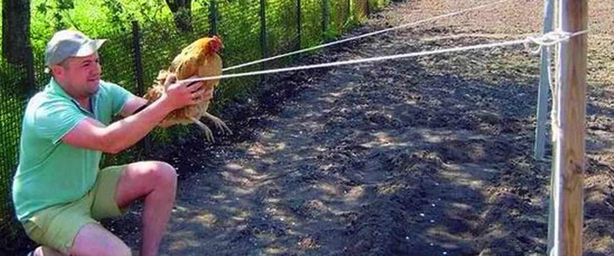 Amiens : un tournoi de Angry Birds géant avec de vraies poules inquiète les associations
