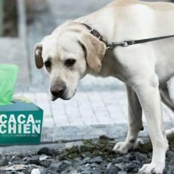 De plus en plus de mouchoirs fabriqués avec du caca de chien recyclé
