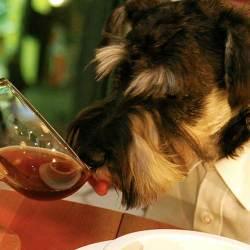Gastronomie : Un chien, Monsieur Charly, élu meilleur sommelier de France