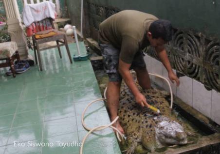 crocodile-salle-de-bain-300x211 Il élève des dauphins dans sa piscine pour nourrir le crocodile qui vit dans sa baignoire