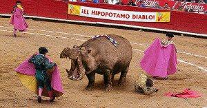 Chili : un mort lors d'une Hipporrida, cette sorte de corrida qui se pratique avec des hippopotames