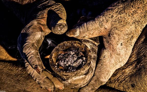 homme-sale-2 Il ne s'est pas lavé depuis 1972 : rencontre avec le Zadiste le plus sale de Notre-Dame-Des-Landes