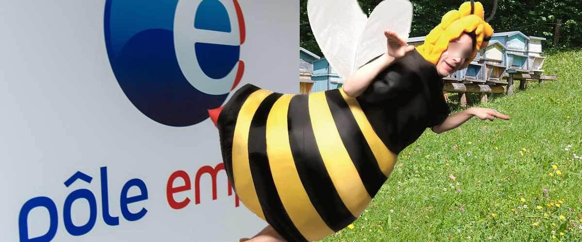 Bientôt des chômeurs pollinisateurs pour remplacer les abeilles