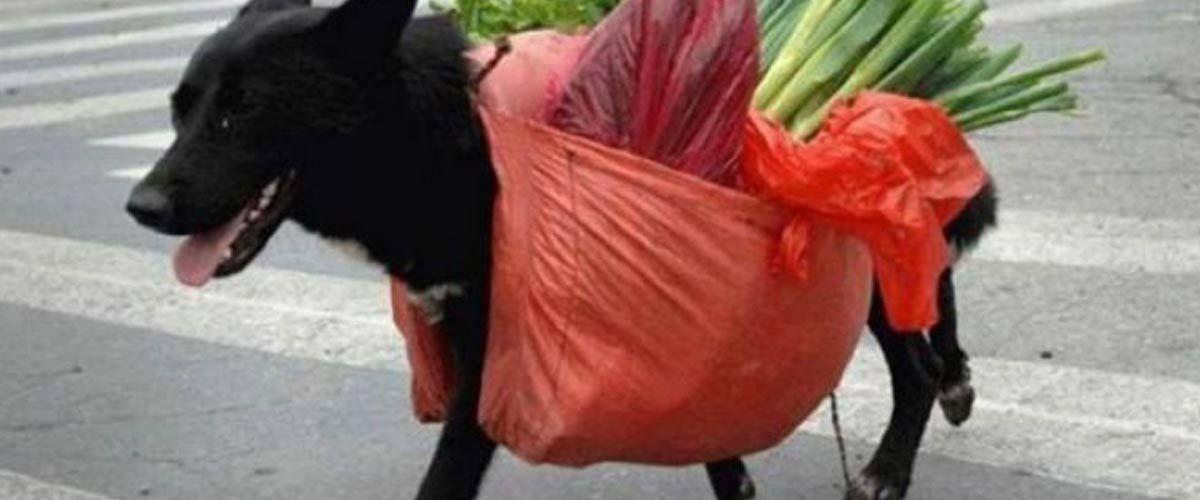 DeliveDog : les chiens livreurs de repas débarquent en France