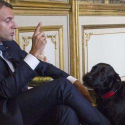 """Les Macron renomment leur chien """"BFM TV"""" - """"car il est docile et obéissant"""""""