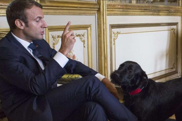 """""""Tu m'appelles """"Votre Majesté"""" et pas """"Wouf"""""""" – Emmanuel Macron recadre et humilie son chien Nemo"""
