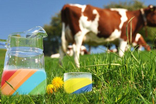 Le lait de vache, symbole du suprématisme blanc, devra être coloré avant d'être vendu