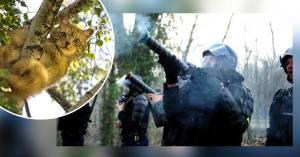 PARIS – des CRS gazent un chat coincé dans un arbre pour l'aider à descendre