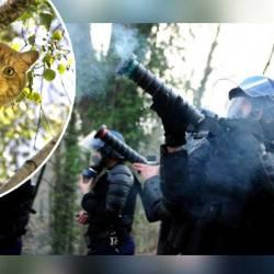 PARIS - des CRS gazent un chat coincé dans un arbre pour l'aider à descendre