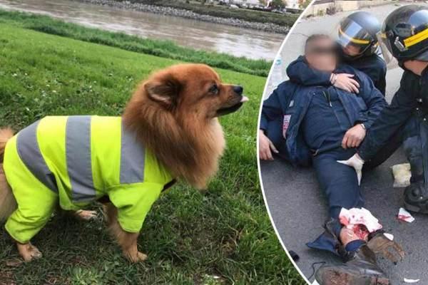 Un CRS mordu par un chien gilet jaune meurt de la rage