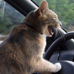 Le chat d'un conducteur endormi prend le volant sur l'A7 et lui sauve la vie