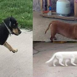 Des animaux mutants découverts près de la centrale nucléaire de Fessenheim (photos)