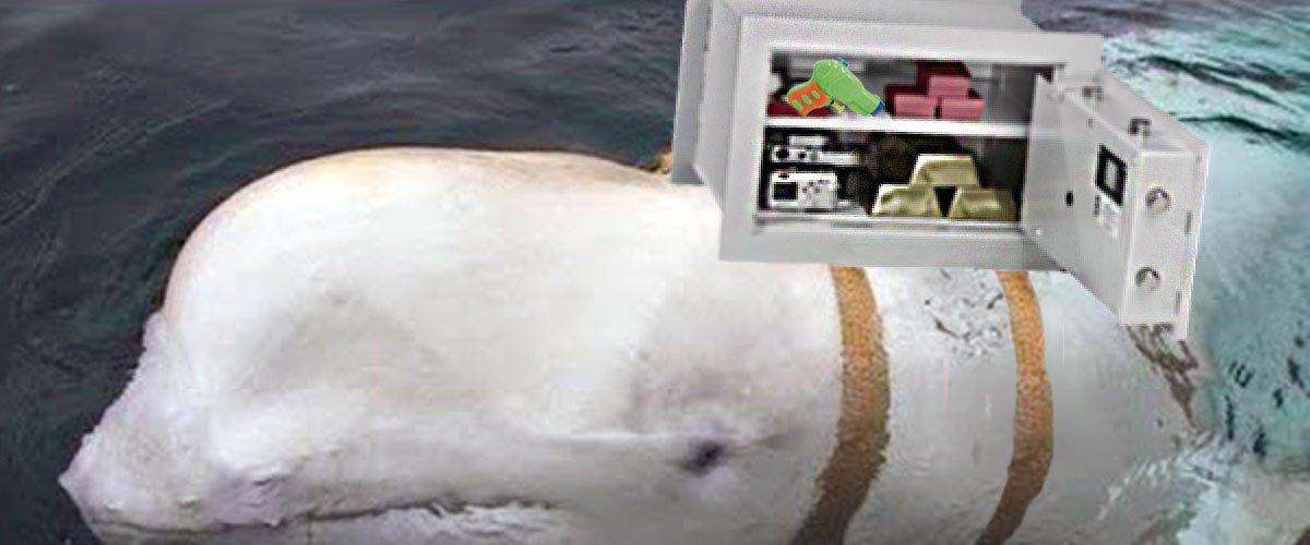 Le beluga russe transportait le coffre-fort de Benalla