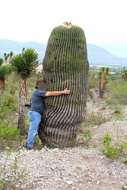 cactus-homme-calin Un Néozélandais hospitalisé après avoir eu des rapports sexuels avec un ... cactus
