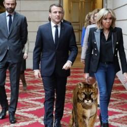 Bolsonaro a offert un cougar à Brigitte Macron pour se faire pardonner ses insultes