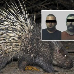 Trois gardiens de zoo accusés d'avoir violé un porc-épic