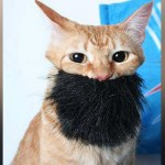 """Leur chat s'est radicalisé : """"Il impose la chat-ria et tourne sa litière vers la Mecque"""""""