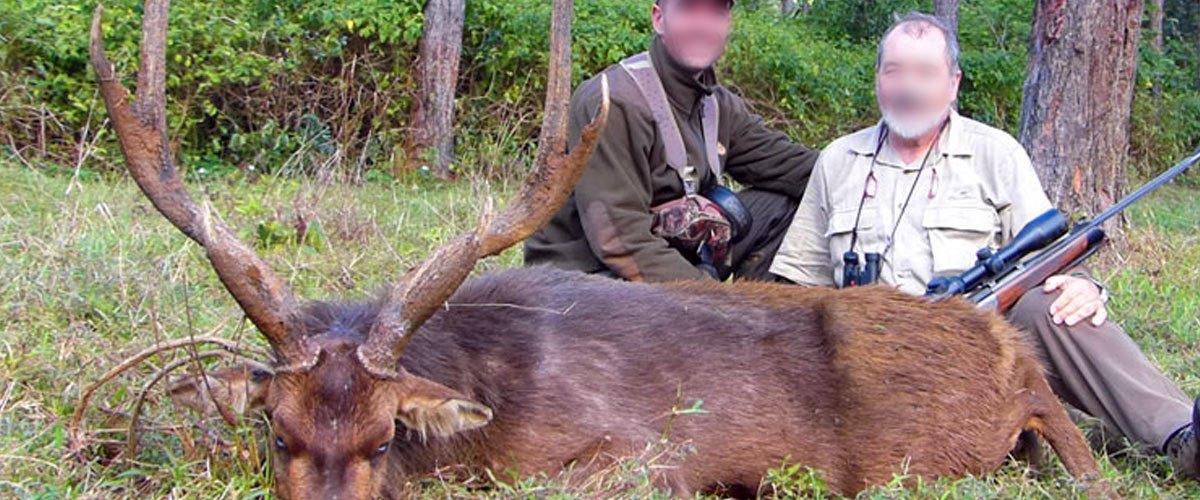 Les chasseurs s'engagent à lutter contre l'effet de cerf en tuant plus de cervidés