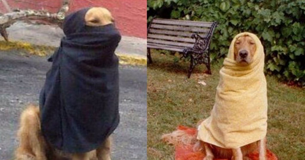 Femme tuée par des chiens : les assassins mangeaient des croquettes halal