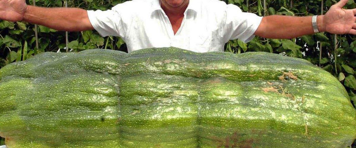 Depuis l'incendie Lubrizol, ce Rouennais gagne tous les concours de légumes géants