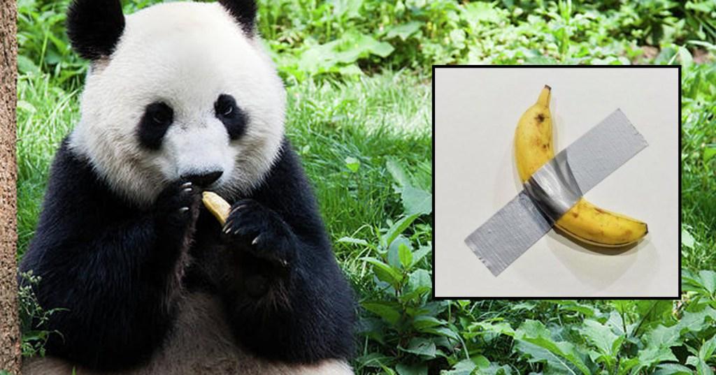 Brigitte Macron a acheté la banane à 120 000 dollars et l'a offerte à son panda