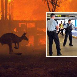 Australie : le kangourou pyromane enfin arrêté !