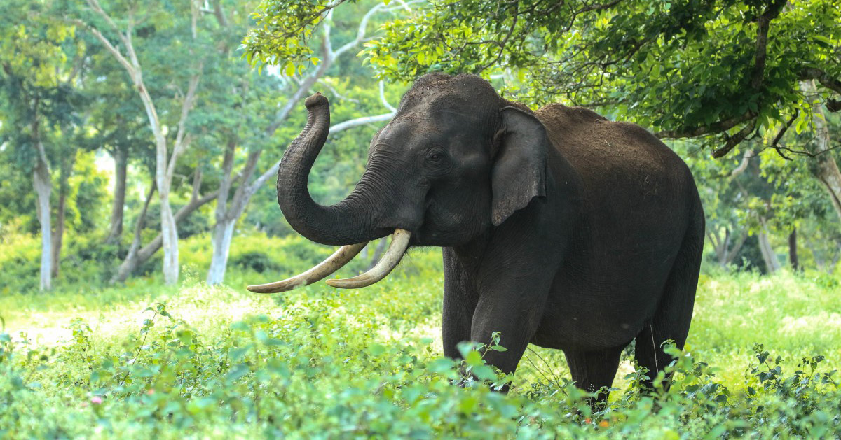 elephant SecretNews