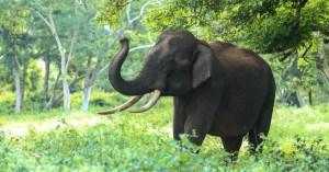 La nature reprend ses droits : un chasseur piétiné par un éléphant dans le Var