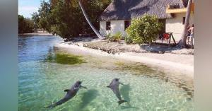 Canicule  : à Dunkerque un habitant photographie des dauphins dans son jardin
