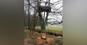 Pour réguler la population de chasseurs, l'état fait appel aux castors