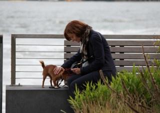 dog lover struggles cover