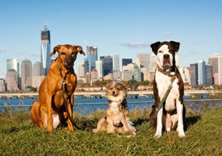 dogs-of-NYC
