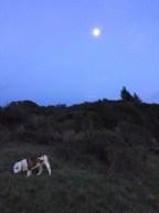Fernwood at Night_0009