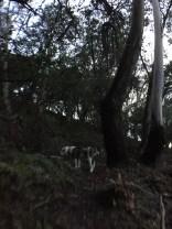 Fernwood at Night_9958