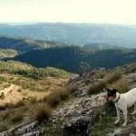 Reducen el estrés de los animales en las perreras