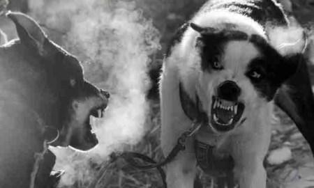 los perros de paulov
