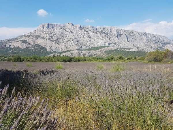 Sainte-Victoire et champ de lavande