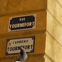 visite guidées les rues d'Aix