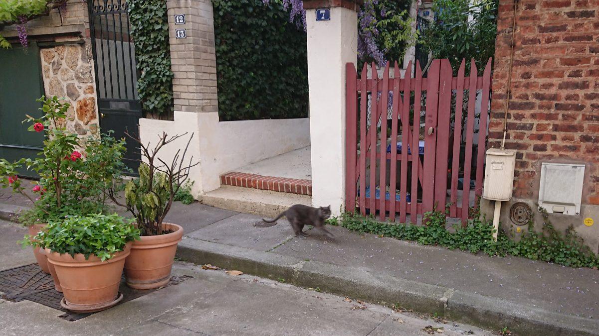 cat on the sidewalk