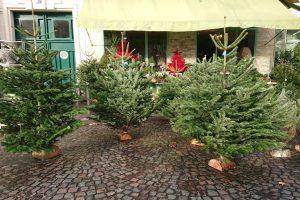 Paris Christmas trees