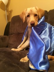 Zoey with her blankie
