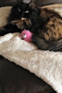 Luna, passed March 2017