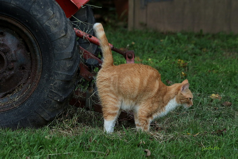Cat Spraying To Mark Their Territory