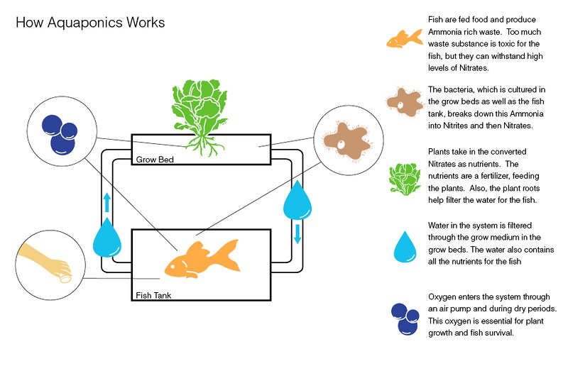 You can adjust the nitrate levels in your aquaponics system by simply add more fish if the nitrate level has dropped, and pull out some fish if the nitrate level has exceeded the recommended level.
