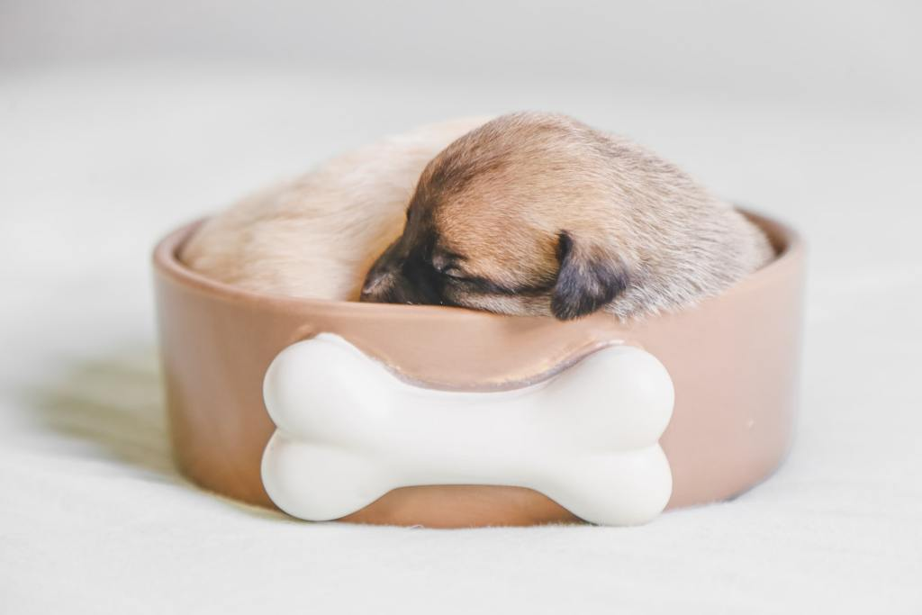 New puppy checklist - your starter list of the right accessories that you'll need which will help your pup to feel right at home.