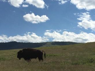 National Bison Range, Flathead Valley, MT