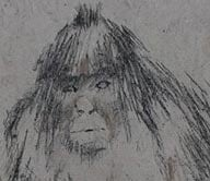 Yeti 'photo-fit' shows 'potentially explosive' evidence of